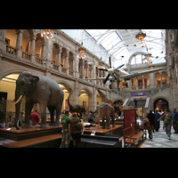 Glasgow, Kelvingrove Museum, Concert Hall, Natural History and Zoology Abteilung