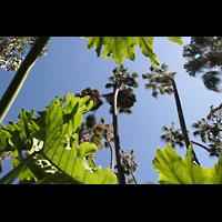 San Diego (CA), Balboa Park, Spreckels Organ Pavilion (Freiluftorgel), Pflanzen