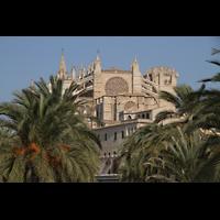 Palma de Mallorca, Catedral La Seu, Kathedrale mit Palmen des Parc de la Mar / Passaig Dalt Murada